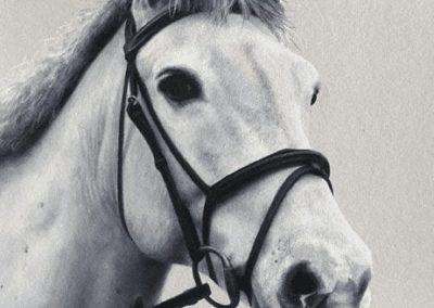 Photorealistic oil painting of a white horse